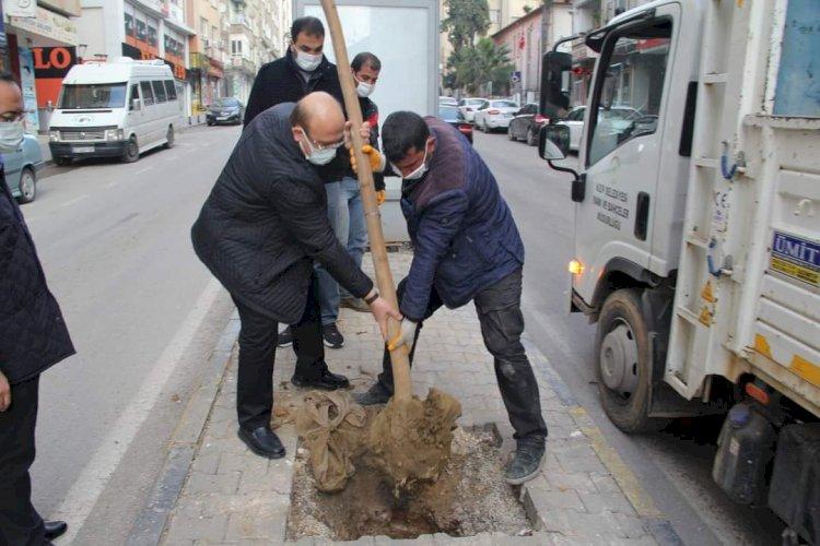 Başkan Sarı ağaçlandırma çalışmasına katıldı