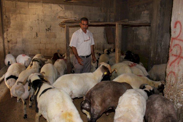 Nizip'te kurbanlık satışları başladı